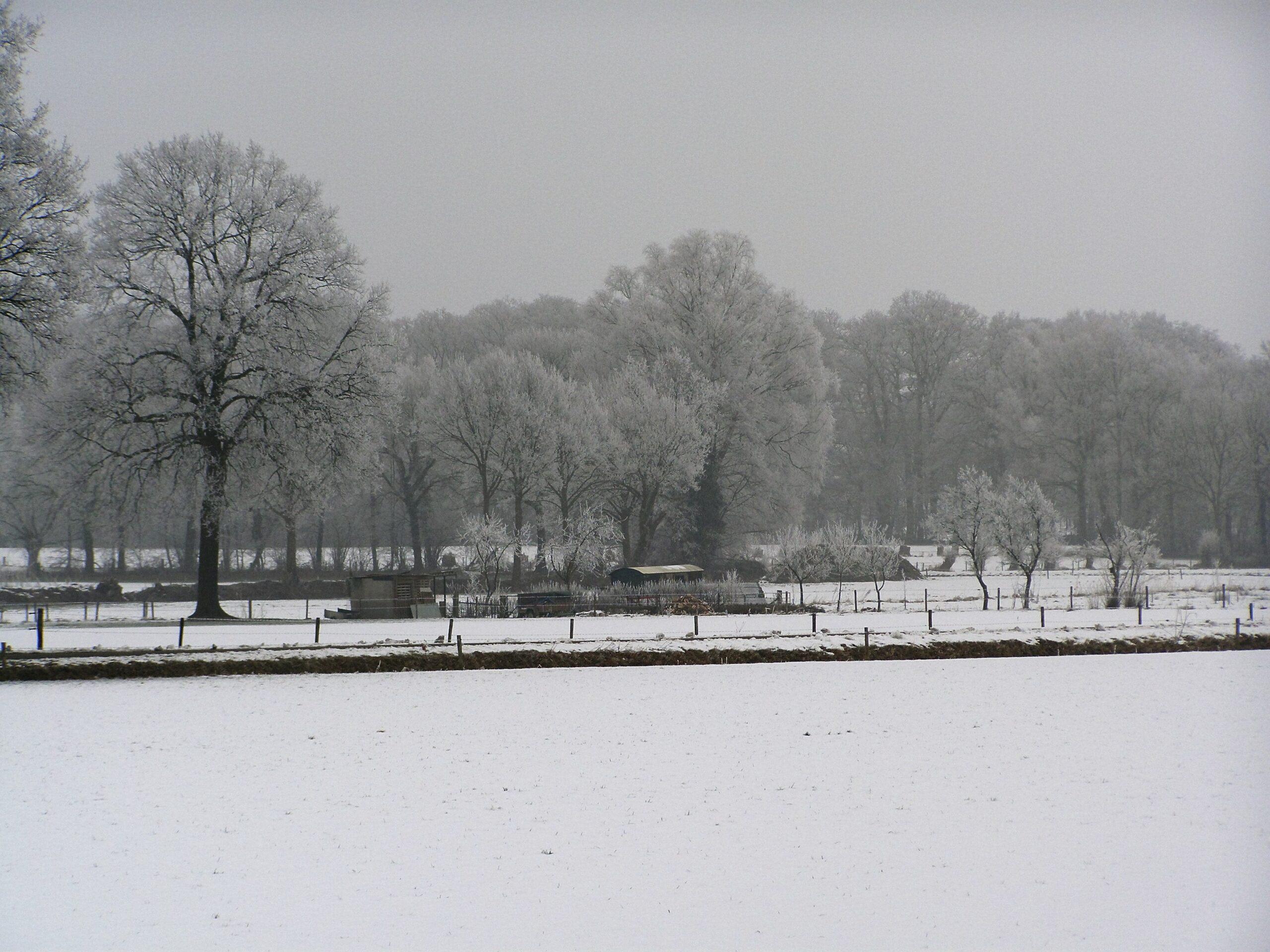 Geweldig Losser in winterseplaatjes